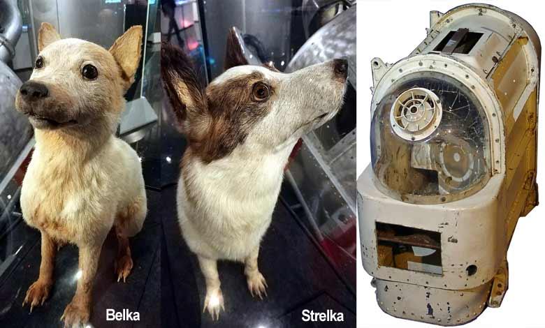 Belka ve Strelka